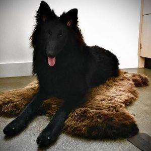 WOOOL Schapenvacht Hond 2